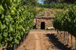 Barraca de vinya_Abadal-1